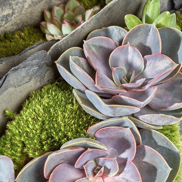 Grafarrangement Scherven & Planten