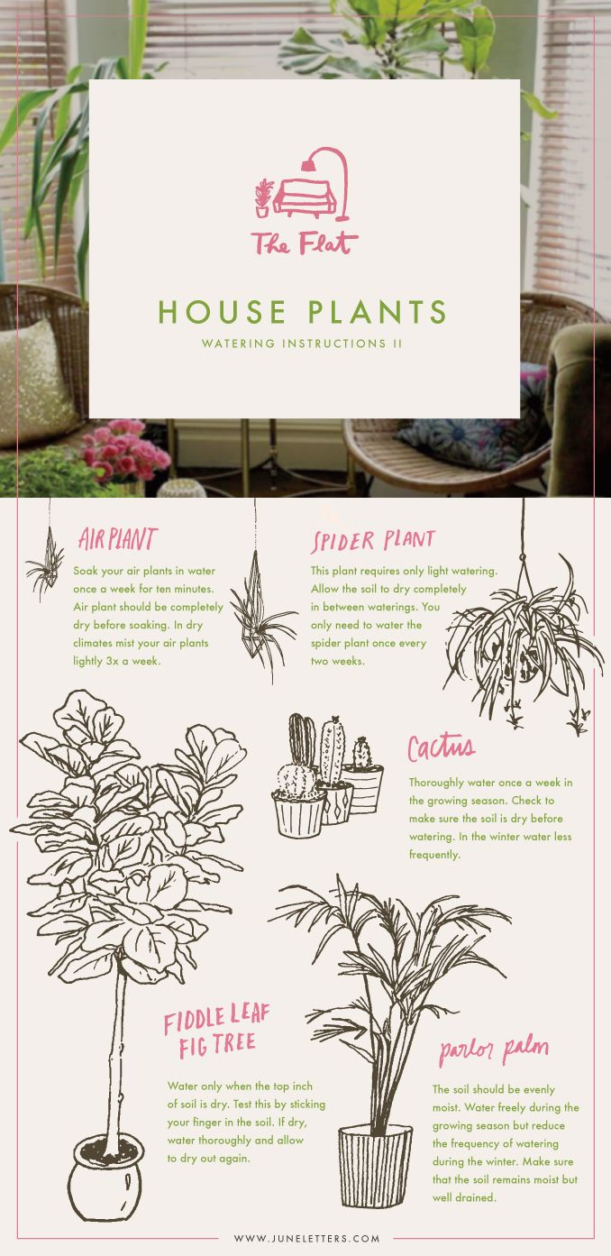 Guide to watering house plants via @june_letters