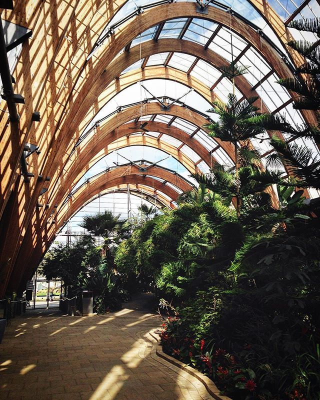 Touristey #saturday  #cities #travel #Sheffield #England #UK #architecture #wintergardens #wood #interior #nature #garden #plants #green #picoftheday