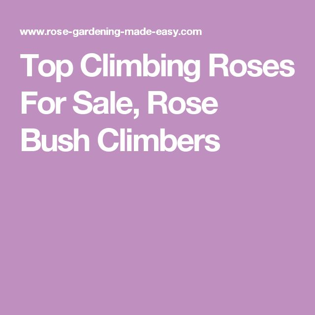 Top Climbing Roses For Sale, Rose Bush Climbers