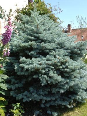 34 best images about arbres et arbustes on pinterest tvs belle and branches. Black Bedroom Furniture Sets. Home Design Ideas
