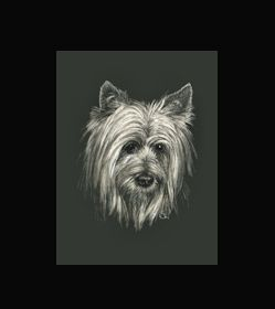 Australian Silky Terrier  - This is the actual size of the scratch art. This size is intended as example of a memorial for an urn. Smaller work can easily be done for a pendant or jewellery.  A web site dedicated to this is planned. In the mean time I can be contacted at sue@suewalters.com #australiansilkyterrier