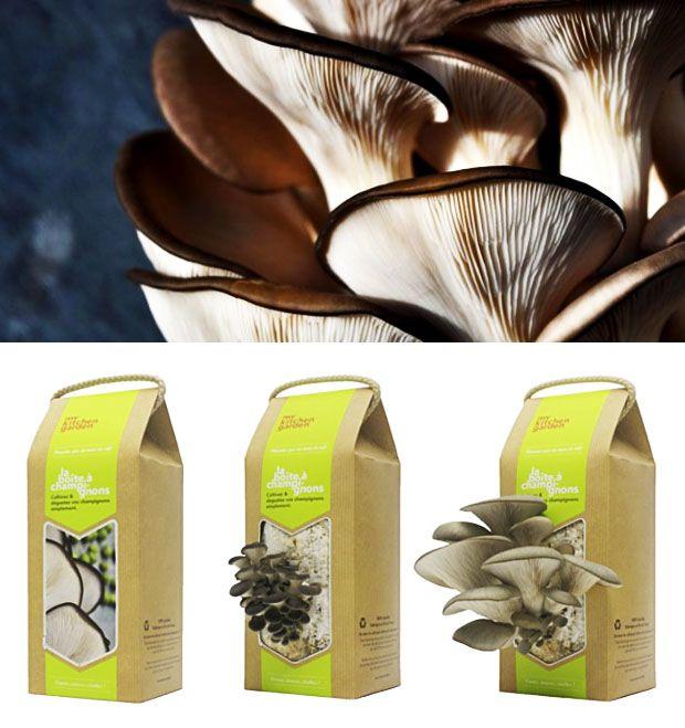 Un kit de culture pour faire pousser des champignons, Mag.Lyonresto.com