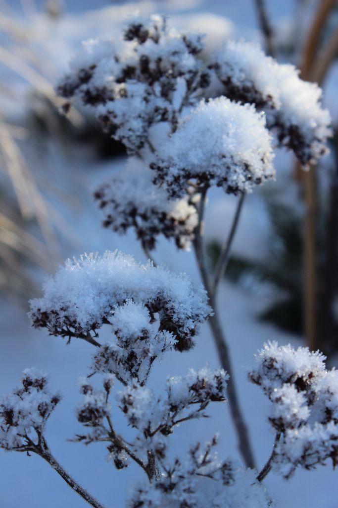 """Blogpost """"Der attraktive Wintergarten"""""""