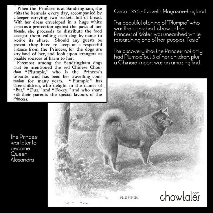 1895 ARTIST Ernest M. Jessop- silverpoint etchings of 2 chows owned of the Princess of Wales - CHOWTALES
