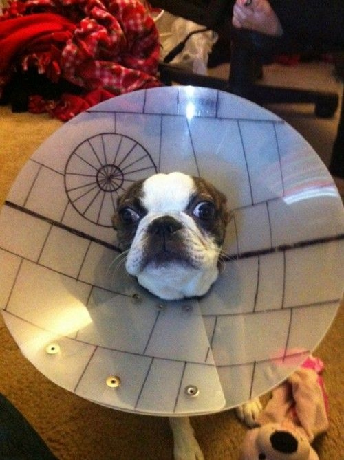 from neatorama: That's no moon. It's a dog. Musha had to wear a cone of shame, so his human decorated it to make it more impressive to other dogs in the neighborhood