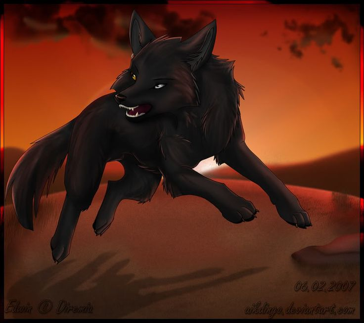Anime Wolf - Bing Images-cool