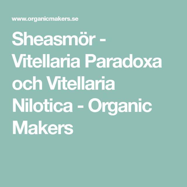 Sheasmör - Vitellaria Paradoxa och Vitellaria Nilotica - Organic Makers