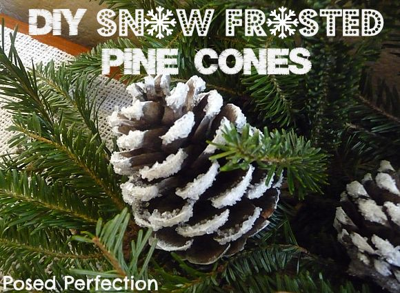 Posed Perfection: DIY Snow Frosted Pine Cones Tutorial Easy way to add some winter to your decor!