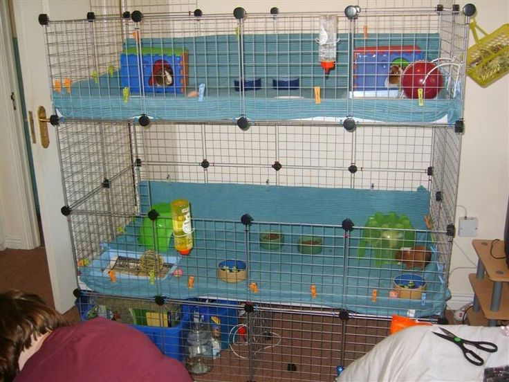 What a cage small animal pinterest small animals for Guinea pig cage for 3
