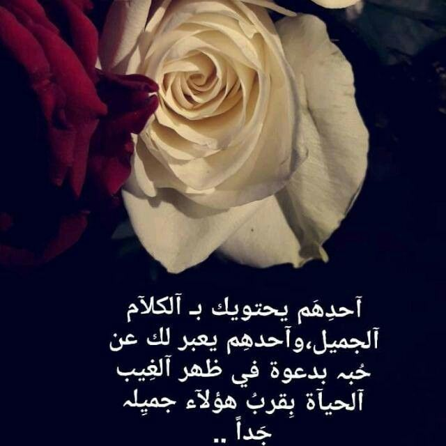 Pin By Om 7moody On خواطر Qoutes Rose Flowers