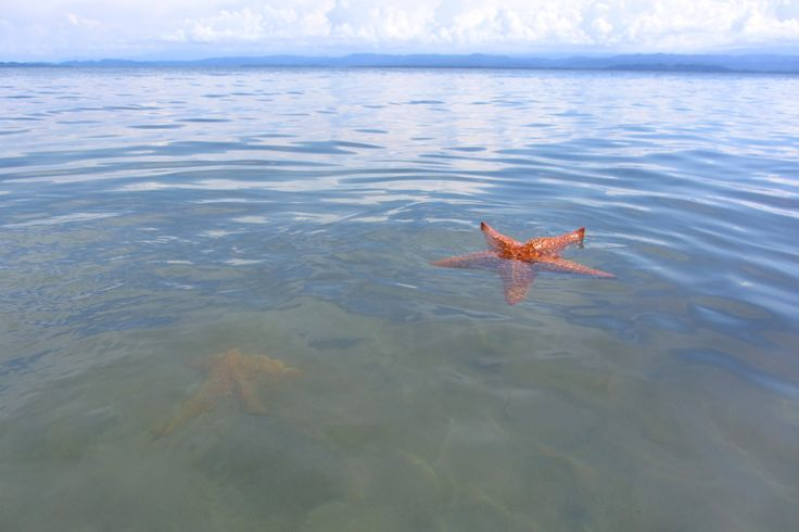 Starfish beach, Bocas Del Torro, Panama