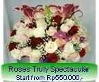 Roses Truly Spectacular