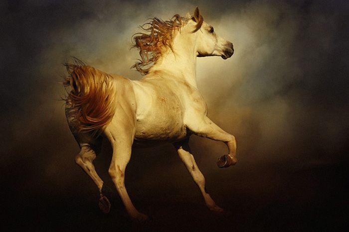 Horses by Dimitar Hristov (2)