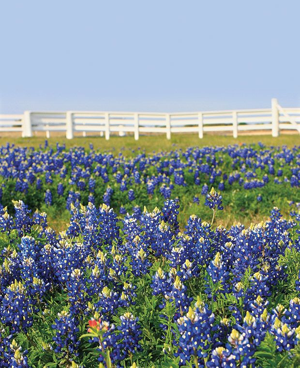 703 Best Images About Travelin Texas On Pinterest Fort