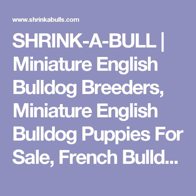 SHRINK-A-BULL | Miniature English Bulldog Breeders, Miniature English Bulldog Puppies For Sale, French Bulldog Puppies For Sale, Blue Bulldogs and Blue English Bulldog Puppies For Sale