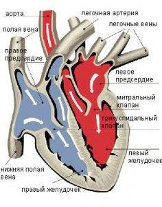 Ревматизм сердца