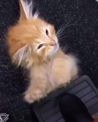 Diez razones fascinantes por las que todos deberían tener un gato #cat #catlover #catfacts #ilovecats #cats    – Katzen