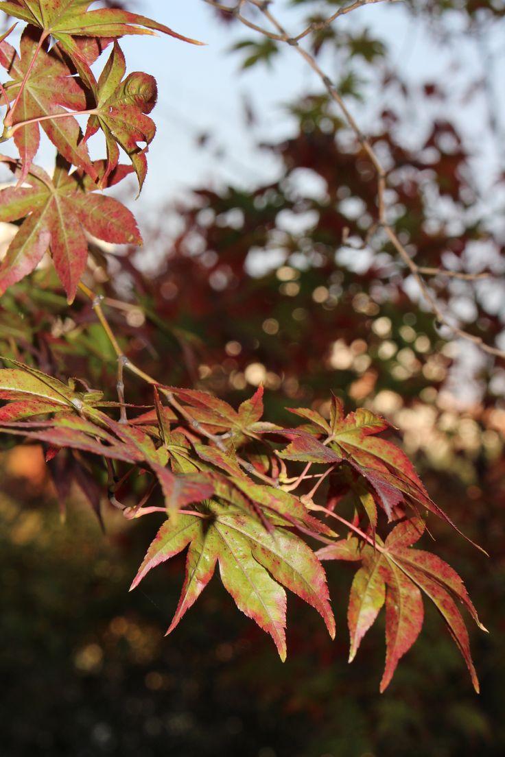 Autumn 2014 #7