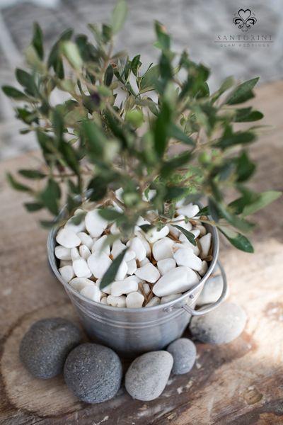 Small olive tree