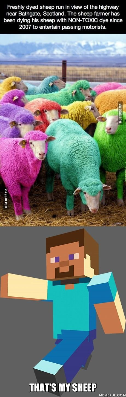 One sheep, two sheep, red sheep, blue sheep