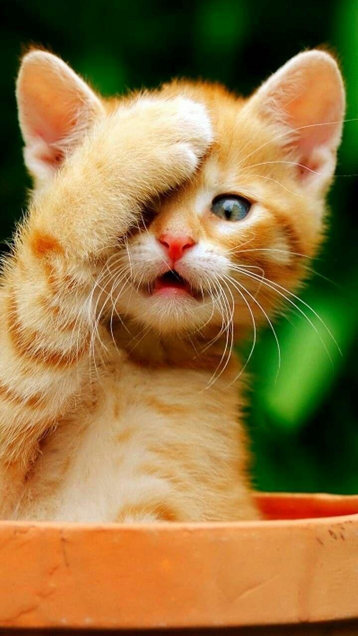 Pin Von Amama Al Shmary Auf لطافه Katzen Fotos Katzenbabys Kleine Katzen