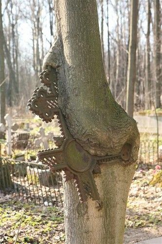 A weathered-cross grave marker has broken and fused with a tree. Smolensk cemetery is said to be the first cemetery of St. Petersburg, Russia. In the 18th century