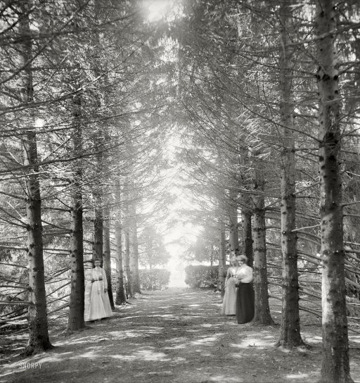 """New Baltimore, Michigan, circa 1901. """"The Firs. Under the firs."""" 8x10 inch dry plate glass negative, Detroit Publishing Company.     http://www.shorpy.com/node/9240"""