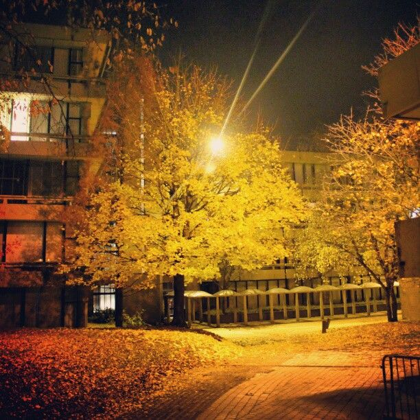 Faculté AGRO, Université catholique de Louvain, Louvain-la-Neuve, #OLLN, #night, #streetphotography, #lights, #trees, #autumn, #yellow, #instadaily, #instapic, #picoftheday, #photooftheday, #instabest