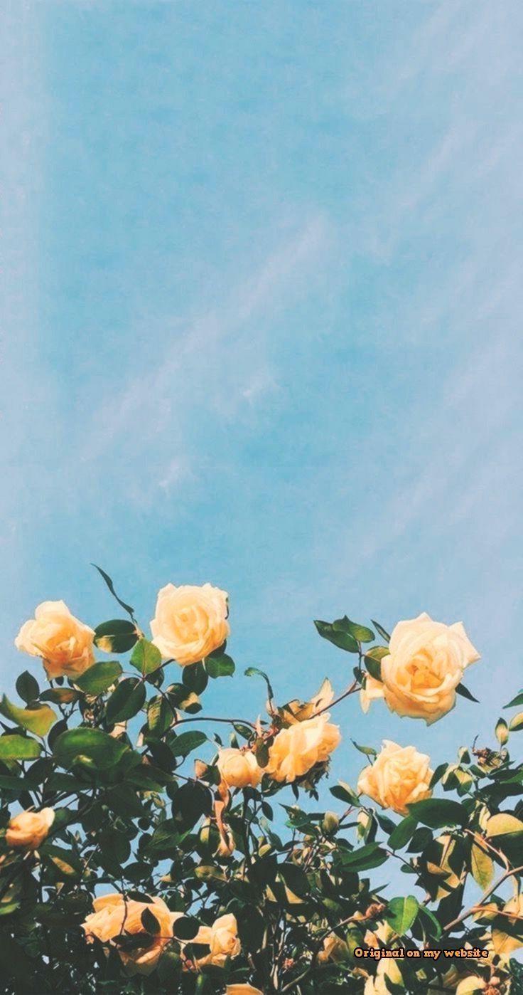 Ecran De Verrouillage Fonds D Ecran Aysun Cute Flower Wallpapers Cute Home Screen Wallpaper Screen Wallpaper