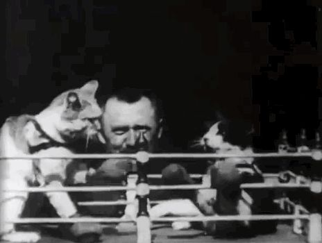 …cats boxing. | Humans Have Been Laughing At Cats Since The 1800s