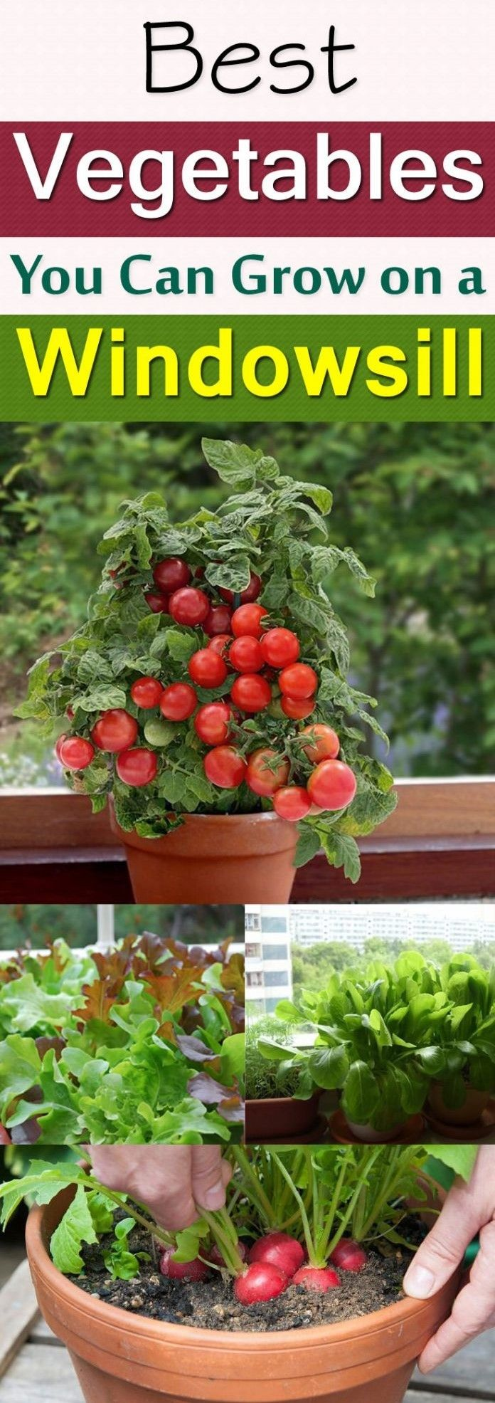 1000 images about diy gardening ideas on pinterest for Gardening 101 vegetables