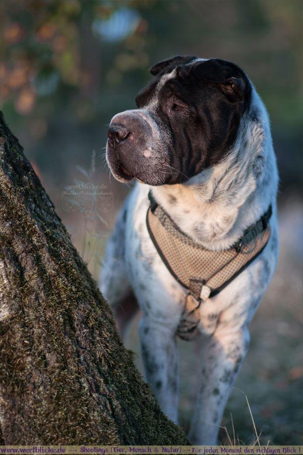 Augenblicke Jeder Noch So Kleine Moment Ist Eine Erinnerung Wert Lass Uns Gemeinsam Wundervolle Momente Auf Tollen Bilder Hundepfoten Hund Und Katze Hunde