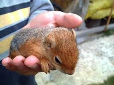 Bebek Sincap