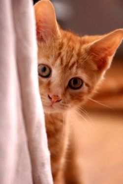 A cat that pees in the house can make your home smell like a litter box. It's upsetting and can be very stressful. Ignoring it or yelling at your...