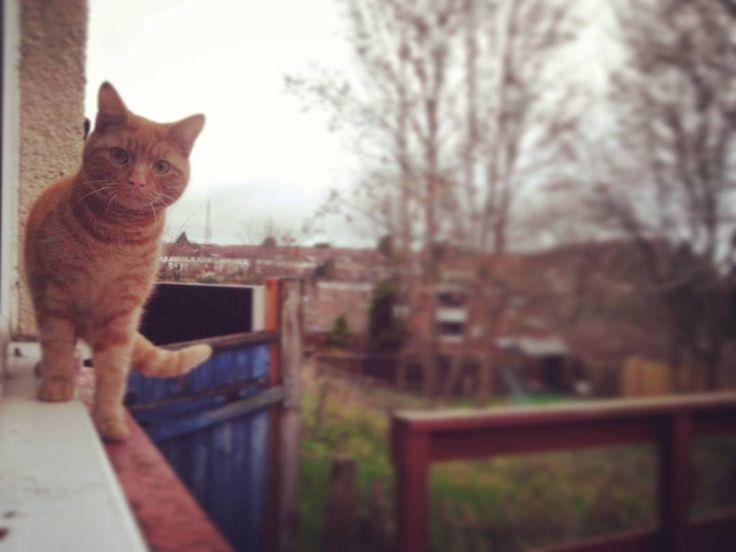"""Wszystko takie szaro bure tylko kotel rudy♡ . . . . . . #allgrey #cat #colourful #englishday #luton #badday #garden #window #redcat #lovely #ilovecats…"""