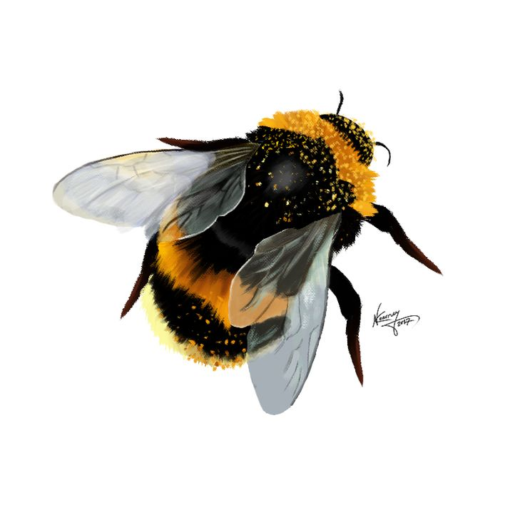 bumblebee photoshop CS6 800×800 (i.redd.it) submitted by Cherrie_Pie to /r/Art 0 comments original – #Art – Abstract Surreal and Fantasy Artists – #Dr…