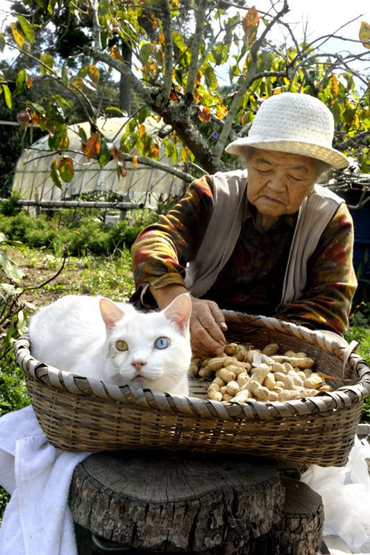 Fukumaru the Cat | MISAO, THE JAPANESE GRANDMOTHER AND HER FRIEND, FUKUMARU    みさおとふくまる  by 伊原 美代子  https://www.amazon.co.jp/dp/4898153194