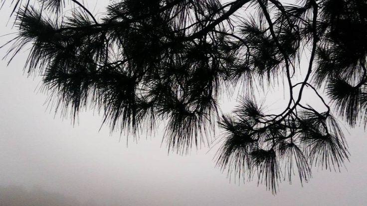 Natural beauty of LATEHAR #incredibleindia #latehar #govindpathak