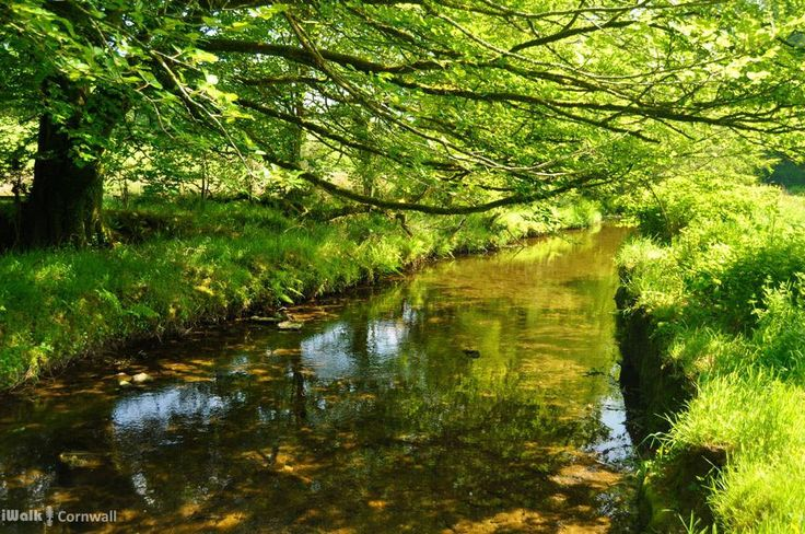 iWalk Camelford Way - a short and easy circular walk from Camelford along the wildflower-rich meadows of the River Camel to the clapper bridge at Fenteroon, returning through the fields with views over the Camel Valley - 1.8 miles - easy - http://iwkc.co.uk/wa/47. Photos on the route: https://www.pinterest.com/iwalkcornwall/iwalk-camelford-way/