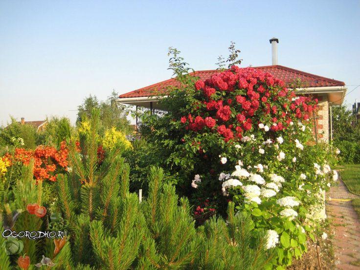 Место для посадки роз    Роза, пожалуй, самая требовательная к уходу и вниманию цветочная культура. Чтобы посаженные кусты роз прижились, выросли и порадовали вас пышным цветением не достаточно просто выкопать ямку, положить в нее саженец и засыпать землей. Выращивание роз требует больших затрат сил и времени. Если вы решили посадить на своем участке эти удивительные цветы, первое, что Вам нужно будет сделать – выбрать место для посадки роз.    Один из самых главных критериев при выборе…