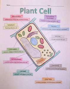 A School Called Home: Growing Some Plant Cells - Make a plant cell while learning the organelles and their functions! FREE!
