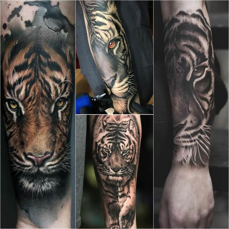 Tiger Tattoo Designs – Combination of Power, Wisdom and Fear of Death