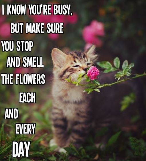 Take Time To Smell The Roses Quote: Stop And Smell The Roses !!!