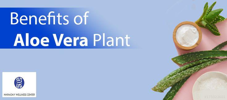 Benefits of Aloe Vera Plant