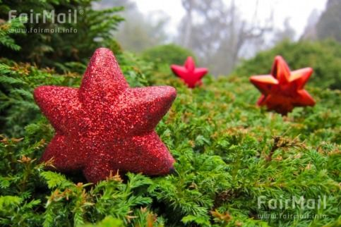 Red Ornaments in a Christmas Tree Photographed by Akaash Ram - India - Holiday - FairMail - Fair Trade Photos - IAKR-0263