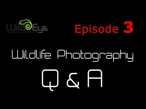Wildlife Photography Q&A: Episode 3