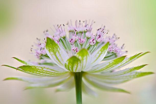 Красивые фотографии цветов  (10)