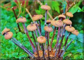 Svampene er nye på bloggen  :) :)  Vejledningen til svampene og trin for trin billeder finder du lige her:   http://agnesingersen.dk/blog/svampe2016/ Husk at give mig noget credit når du bruger mine ideer <3 #Svampe #mushrooms #champignons #Pilze