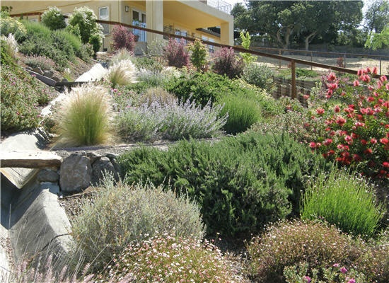 Drought tolerant slope plants landscape ideas for Hillside landscaping plants